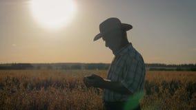 Ο ηλικιωμένος γεωπόνος αγροτών στο καπέλο κάουμποϋ στον τομέα ελέγχει την ωρίμανση της συγκομιδής φιλμ μικρού μήκους