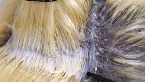 Ο κομμωτής προκαλεί το χρώμα στις ρίζες του προτύπου, κλείνει επάνω φιλμ μικρού μήκους
