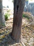 Ο νεκρός ατμός δέντρων με πράσινο βγάζει φύλλα στοκ φωτογραφίες με δικαίωμα ελεύθερης χρήσης