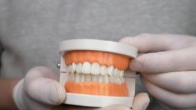 Ο οδοντίατρος στα άσπρα γάντια παρουσιάζει πρότυπο διδασκαλίας των γομμών και των δοντιών απόθεμα βίντεο