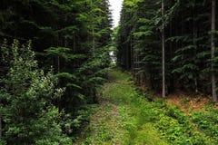 Ο δρόμος, μια πορεία στο δάσος στα βουνά στοκ εικόνα