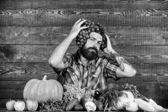 Ο φρέσκος οργανικός γενειοφόρος τύπος της Farmer συγκομιδών με τα homegrown σταφύλια συγκομιδών έβαλε στο κεφάλι Σταφύλια από τον στοκ εικόνα