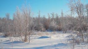Δάσος το χειμώνα Πολύ χιόνι Στα δέντρα πρώτου πλάνου χωρίς φύλλωμα στον παγετό φιλμ μικρού μήκους