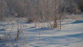 Δάσος το χειμώνα Πολύ χιόνι Στα δέντρα πρώτου πλάνου χωρίς φύλλωμα στον παγετό απόθεμα βίντεο