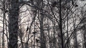 Δάσος το χειμώνα Πολύ χιόνι Πολύ χιόνι Στο πρώτο πλάνο, μύγα πουλιών από τον κλάδο στον κλάδο απόθεμα βίντεο