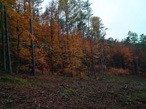 Δάσος φθινοπώρου η ομορφιά της φύσης το φθινόπωρο στοκ εικόνες με δικαίωμα ελεύθερης χρήσης