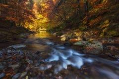 Δάσος φθινοπώρου πέρα από τον ποταμό Irati σε Navarra στοκ εικόνες