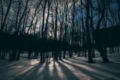 δάσος πυκνά στοκ εικόνες