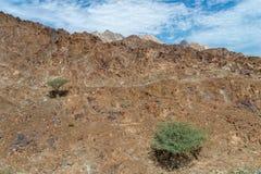 2 δέντρα ακακιών στα βουνά Hajar, Ομάν στοκ φωτογραφία