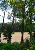 Δέντρα από το μέτωπο ποταμών στοκ φωτογραφία με δικαίωμα ελεύθερης χρήσης