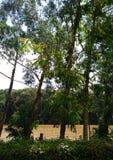 Δέντρα από το μέτωπο ποταμών στοκ εικόνα με δικαίωμα ελεύθερης χρήσης