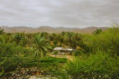 δέντρα βουνών στα Ηνωμένα Αραβικά Εμιράτα στοκ φωτογραφία με δικαίωμα ελεύθερης χρήσης