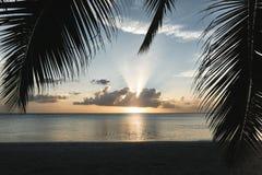 δέντρα ηλιοβασιλέματος &ph στοκ εικόνα