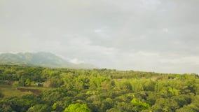 Δέντρα μάγκο στον τροπικό κήπο και γεωργικός τομέας στο ασιατικό χωριό στο τοπίο βουνών Κήπος και καλλιέργεια φρούτων απόθεμα βίντεο