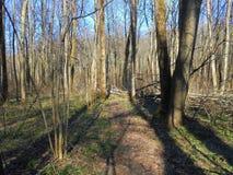 Δέντρα με το δάσος σκιών την άνοιξη στοκ φωτογραφία με δικαίωμα ελεύθερης χρήσης