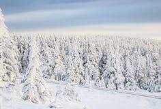 Δέντρα πεύκων χιονιού coverd