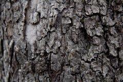 δέντρο σύστασης φλοιών ανασκόπησης Ξεφλουδίστε το φλοιό ενός δέντρου που επισημαίνει το ράγισμα στοκ εικόνες