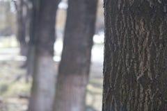 δέντρο σύστασης φλοιών ανασκόπησης Ξεφλουδίστε το φλοιό ενός δέντρου που επισημαίνει το ράγισμα στοκ φωτογραφία