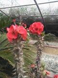 Δέντρο φύσης εγκαταστάσεων κήπων λουλουδιών στοκ φωτογραφία με δικαίωμα ελεύθερης χρήσης
