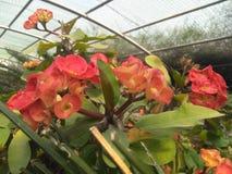 Δέντρο φύσης εγκαταστάσεων κήπων λουλουδιών στοκ εικόνες με δικαίωμα ελεύθερης χρήσης