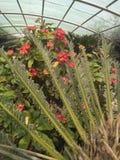 Δέντρο φύσης εγκαταστάσεων κήπων λουλουδιών στοκ φωτογραφίες με δικαίωμα ελεύθερης χρήσης