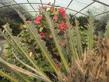 Δέντρο φύσης εγκαταστάσεων κήπων λουλουδιών στοκ φωτογραφία