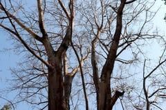 Δέντρο χωρίς φύλλο που λαμβάνεται κάτω από το φωτεινό ήλιο στοκ εικόνες με δικαίωμα ελεύθερης χρήσης