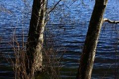 Δασική λίμνη Pacific Northwest στοκ εικόνες