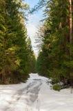 Δασικός δρόμος μεταξύ των δέντρων έλατου Το ελατήριο και το ελαφρύ χιόνι στοκ εικόνες