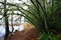 Δασικό ίχνος πεζοπορίας Pacific Northwest στοκ φωτογραφίες με δικαίωμα ελεύθερης χρήσης