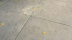 Δημητριακά, αλεύρι και σπόροι στο γκρίζο κεραμίδι στο πάτωμα κουζινών Βρώμικο πάτωμα κουζινών με τα περισσεύματα φιλμ μικρού μήκους