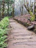 Διάβαση ξυλείας κατά μήκος του λόφου στοκ φωτογραφίες