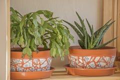 Διακοσμητικό flowerpot μωσαϊκών στοκ φωτογραφία με δικαίωμα ελεύθερης χρήσης