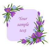 Διανυσματική απεικόνιση με την ανθοδέσμη των ιωδών και μπλε κρόκων Το πλαίσιο για το κείμενο με το σαφράνι ανθίζει τη διακόσμηση στοκ εικόνα