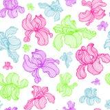 Διανυσματικό άνευ ραφής σχέδιο των λουλουδιών ίριδων χρώματος απεικόνιση αποθεμάτων