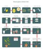 Διανυσματικό διάγραμμα πώς να αυξηθεί ένα δέντρο λεμονιών απεικόνιση αποθεμάτων