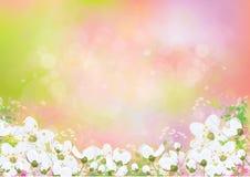 Διανυσματικό floral υπόβαθρο άνοιξη ελεύθερη απεικόνιση δικαιώματος