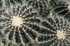 Διαφορετικό μεγέθους Succulents, κάκτος με Pricklies στοκ φωτογραφία με δικαίωμα ελεύθερης χρήσης