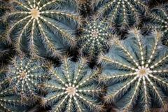 Διαφορετικό μεγέθους Succulents, κάκτος με Pricklies στοκ εικόνα