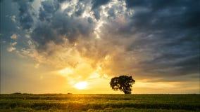 Δραματικό ηλιοβασίλεμα σε έναν τομέα, timelapse βίντεο φιλμ μικρού μήκους