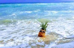 Δροσερός ανανάς στην κυματωγή στοκ εικόνα με δικαίωμα ελεύθερης χρήσης
