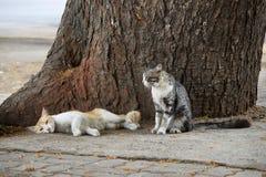 Δύο γάτες που στηρίζονται στον κορμό δέντρων, Pune, Maharashtra, Ινδία στοκ εικόνες με δικαίωμα ελεύθερης χρήσης