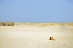 Île abandonnée de paradis de Giftun image stock