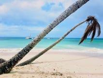 Île Cayo Levantado de Bacardi Photos libres de droits