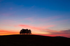 Île complètement des arbres dans le domaine moyen Photo stock