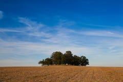 Île complètement des arbres dans le domaine moyen Photo libre de droits