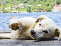 Île décontractée heureuse de chien Photo stock