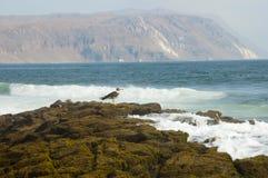 Île d'Alacran - Arica - Chili Photographie stock libre de droits
