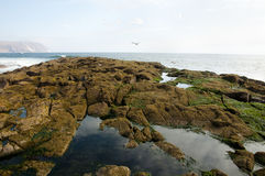 Île d'Alacran - Arica - Chili Image libre de droits
