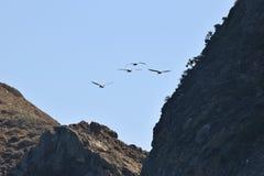 Île d'Anacapa Images libres de droits